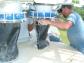 Plant Maintenance & Troubleshooting